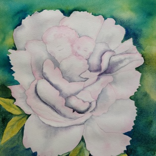 Les roses blanches_AD
