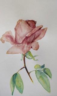 Coeur de rose - AD 15X20 Jus betterave et maizena